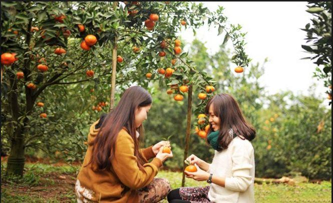 Là vườn trái cây to bậc nhất miền Nam