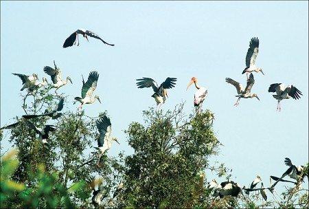 Khu du lịch Vườn chim Cà Mau (Nguồn Baocamau)