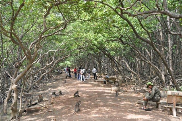 Khu du lịch đảo Khỉ Cần Giờ tphcm , mát mẻ của hệ sinh thá rừng nguyên sinh ngập mặn (Ảnh sưu tầm)