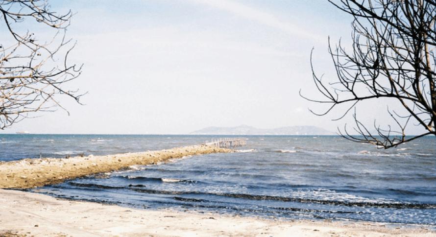Du lịch Cần Giờ kinh nghiệm đi Bãi biển 30 Tháng Tư (Ảnh: Sưu tầm)