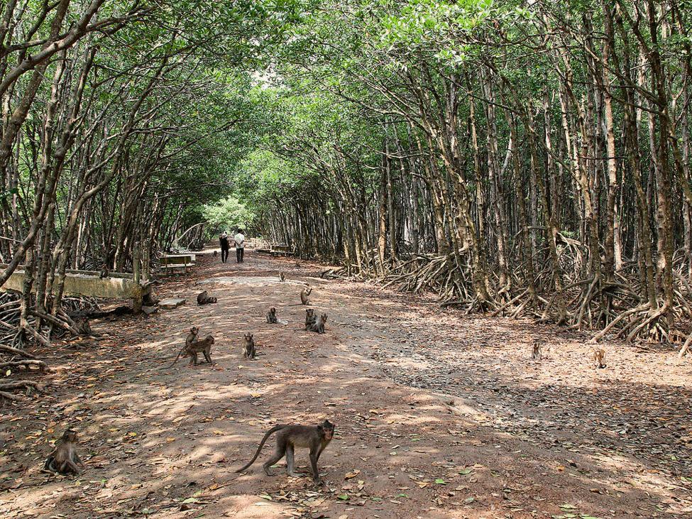 Cùng review du lịch Cần Giờ đảo Khỉ(Ảnh: Sưu tầm)