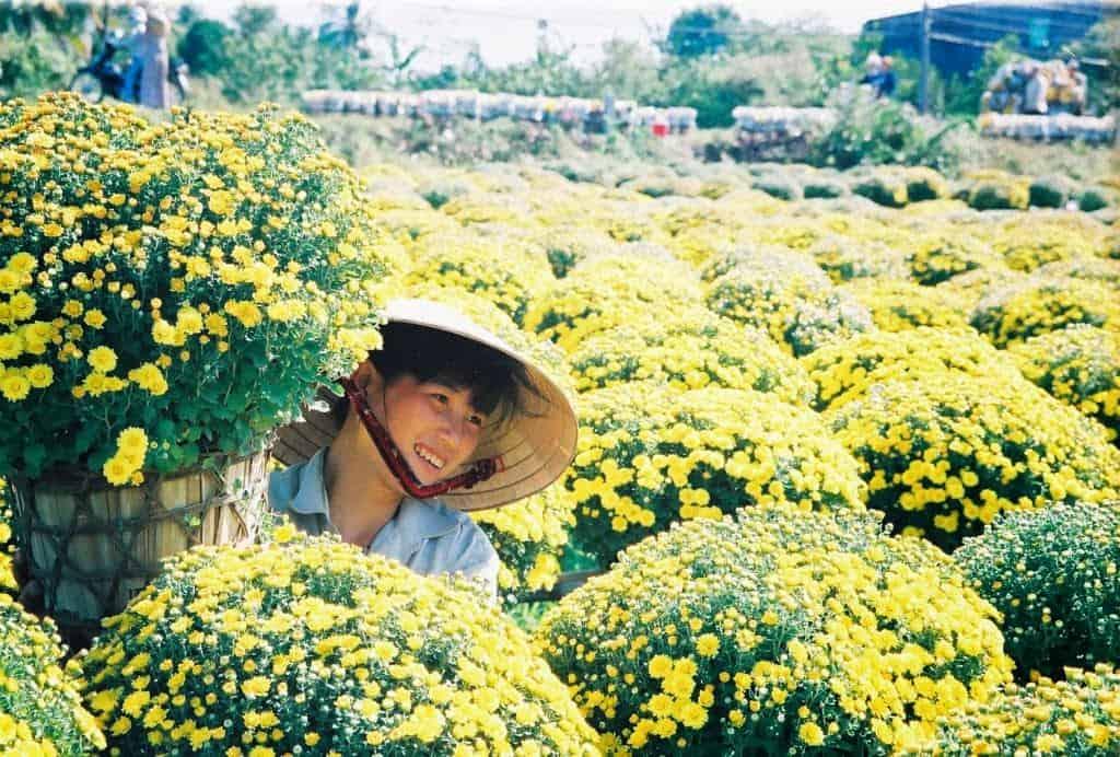 Làng hoa cảnh chợ Lách
