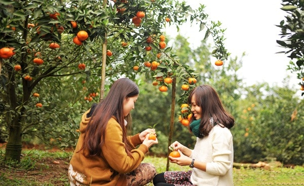 Du khách tự tay hái và thưởng thức trái cây tươi ngon (Ảnh: ST)