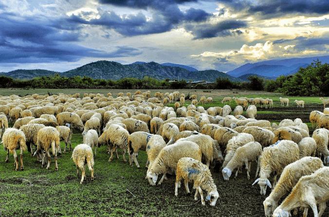 Địa điểm đồng Cừu Suối Nghệ ở Vũng Tàu