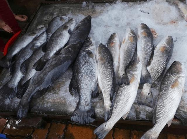 Những con cá được ướp đá để giữ độ tươi trong ngày