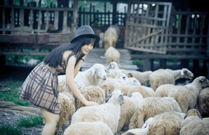 Hình ảnh thân thiện của các chú cừu