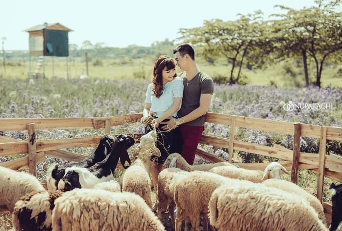 Chụp hình đẹp cùng các chú Cừu