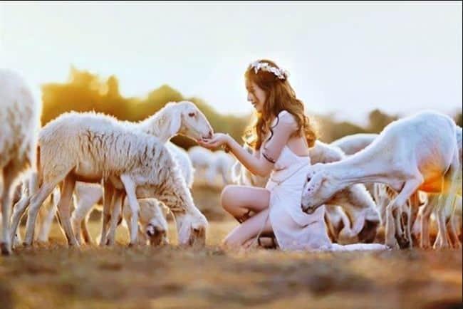 Vẻ đẹp cuốn hút đồi cừu Vũng Tàu về chiều