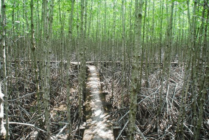 Đường rừng tại Vàm Sát