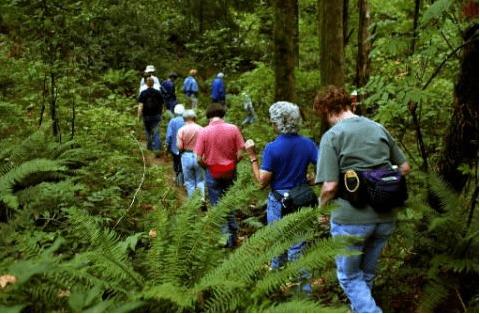 Thám hiểm rừng để khám phá thế giới tự nhiên