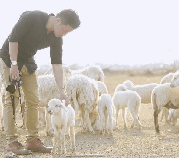 Những chú cừu dễ thương thích được cưng nựng