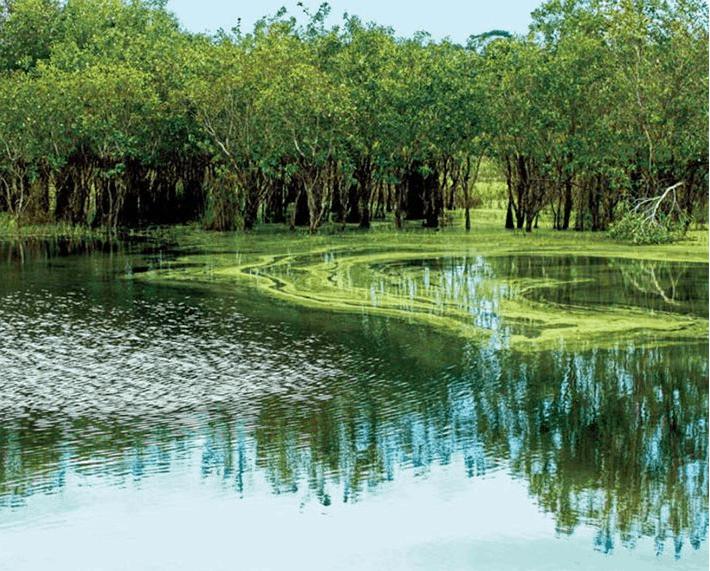 Khu bảo tồn thiên nhiên Bình Châu - Phước Bửu