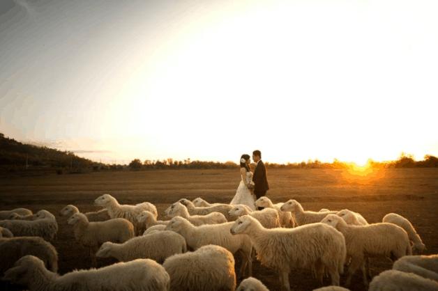 Đồi cừu - địa điểm chụp ảnh cưới mới mẻ