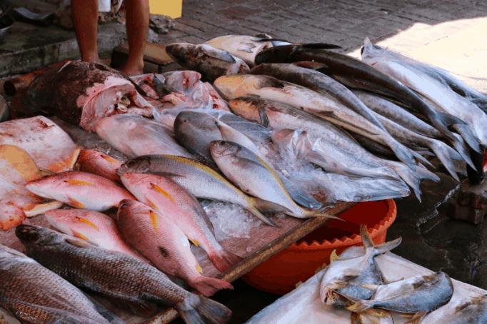 Sạp cá tươi ngon ở chợ Xóm Lưới