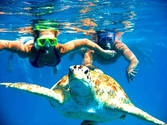 Bơi cùng Rùa biển (Ảnh: ST)