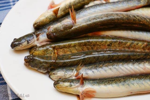 Những con cá Kèo tươi sống (Ảnh: ST)