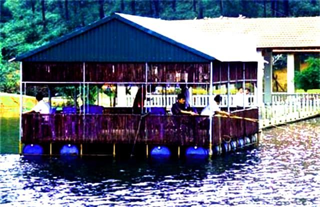 Câu cá ở hồ Trại Tiểu