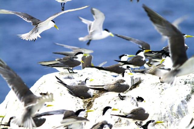 Loài chim biển hoang dã (Ảnh: ST)