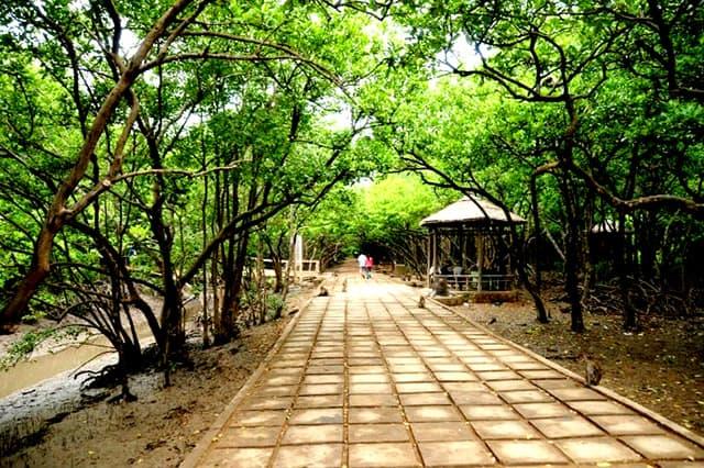Con đường tham quan đảo khỉ Cần Giờ phủ kín cây xanh (Ảnh: ST)