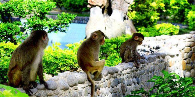 Những chú khỉ ở đây rất thích chụp ảnh