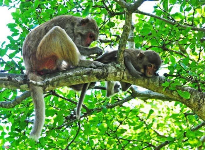 Khỉ trên đảo khỉ