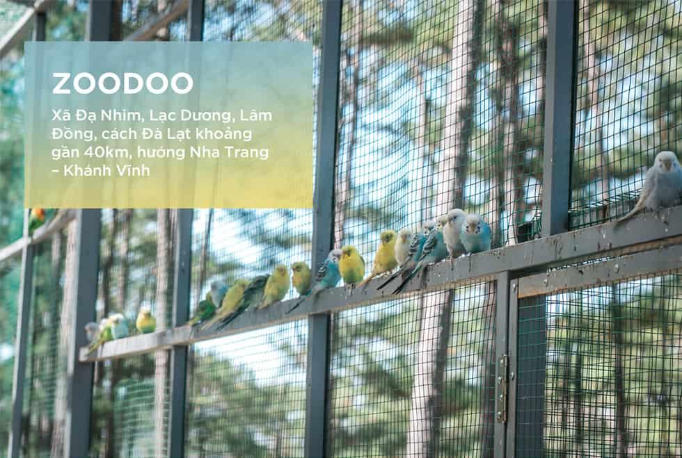 Zoodoo - Điểm đến thú vị ở Đà Lạt