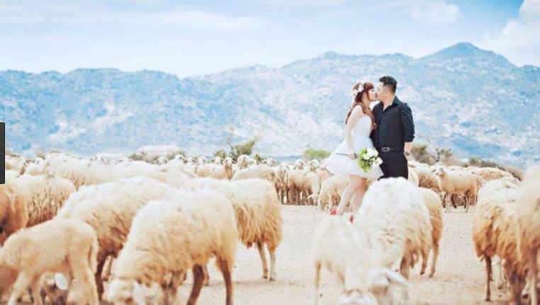 Các bức ảnh cưới đẹp trại cừu Vũng Tàu