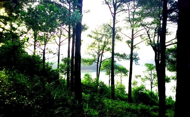 Đồi thông nhìn xuống hồ Trại Tiểu