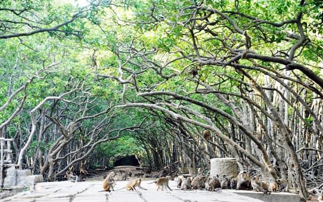 Cây mọc thành cổng vòm tại khu du lịch đảo khỉ Cần Giờ (Ảnh: ST)