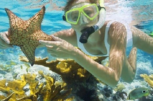 Lặn ngắm san hô Côn Đảo (Ảnh: ST)
