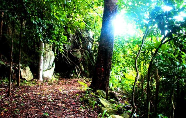 Lối đi vào hang cây cối rậm rạp (Ảnh: ST)