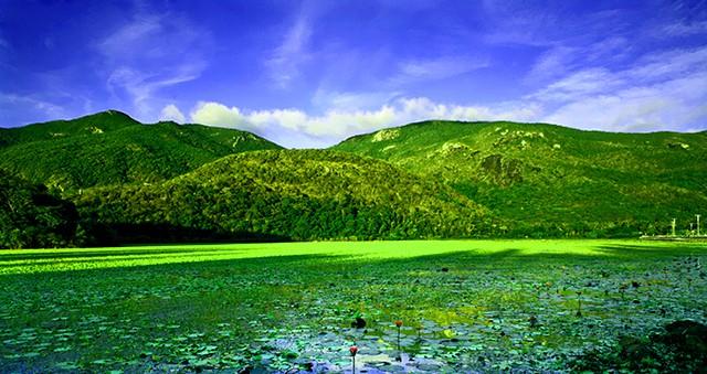Mặt hồ mùa hè (Ảnh: ST)