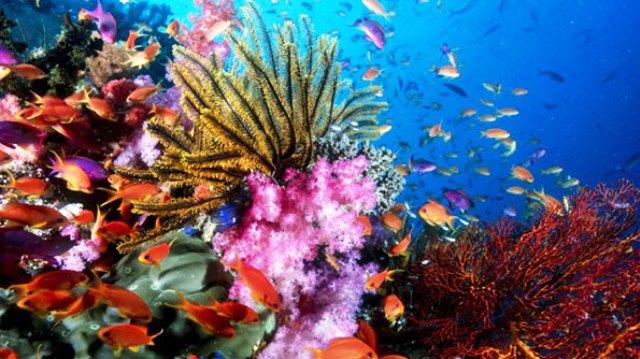 Màu sắc lòng biển cả (Ảnh: ST)
