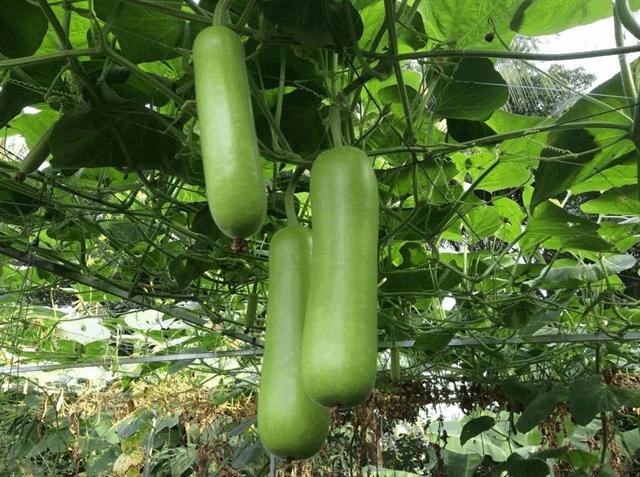 nhiều các loại rau, quả sạch