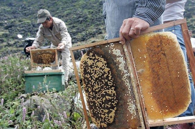 Bạn có thể trải nghiệm hoạt động nuôi ong hết sức thú vị