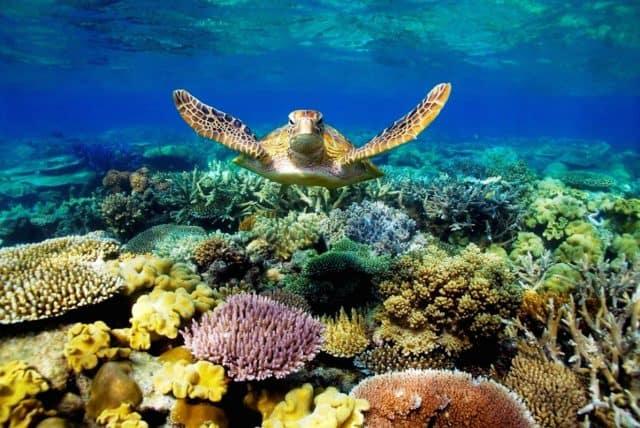 Rùa biển Côn Đảo (Ảnh: ST)