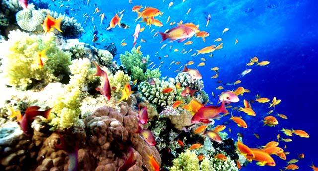 Rạn san hô Côn Đảo (Ảnh: ST)