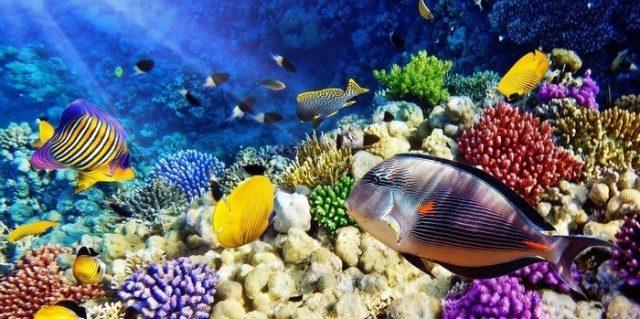 Lặn biển ngắm san hô tại Bãi Dài Nha Trang