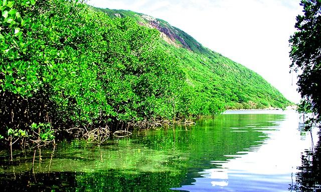Hệ thực vật phong phú của vườn quốc gia Côn Đảo