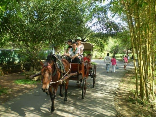 Du lịch Cồn Phụng bằng xe ngựa
