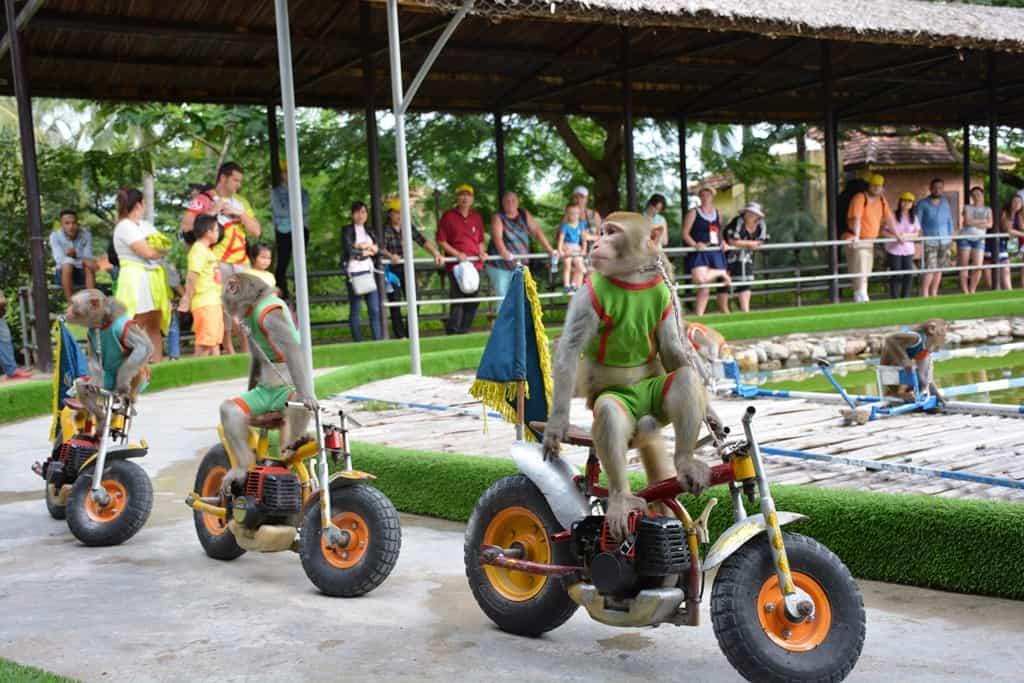 Đảo Khỉ Nha Trang - cảm nhận niềm vui mới lạ và hấp dẫn - ảnh 5