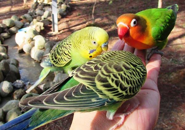 Những chú chim tự nhiên ăn trên tay người đến sở thú Zoodoo Đà Lạt