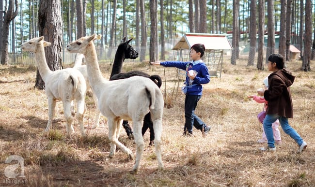 Trẻ em tự nhiên nô đùa trong sở thú Zoodoo