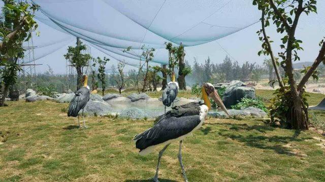 Công viên FLC Zoo Safari Park là một trong các điểm vui chơi trung thu Quy Nhơn