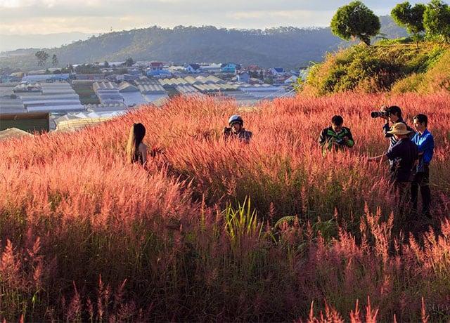 Check-in trên đồi cỏ hồng Đà Lạt