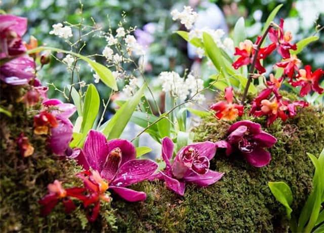 Triển lãm cây cảnh quốc tế ở Lễ hội Festival hoa Đà Lạt