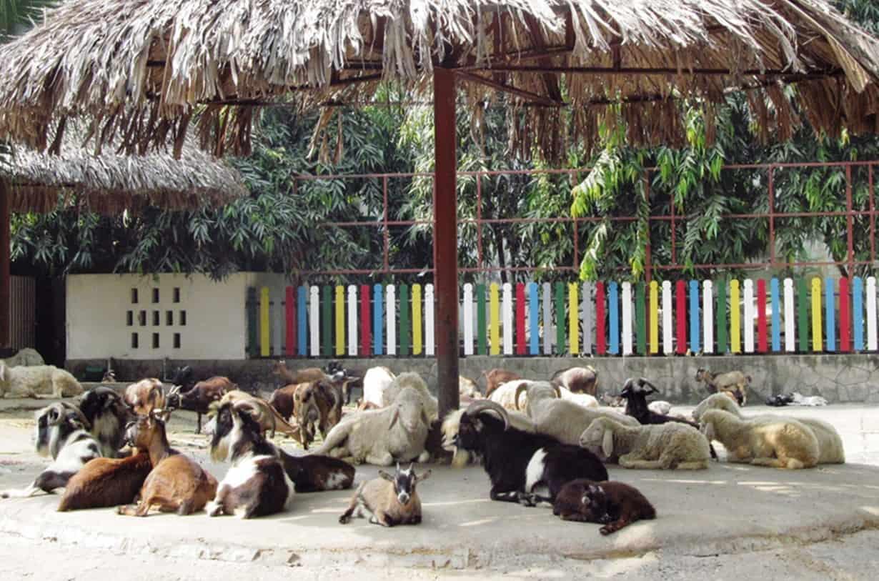 Vườn thú thiếu nhi
