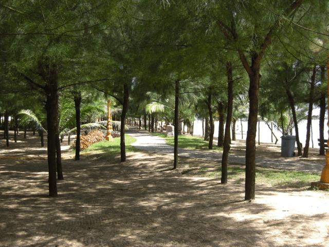 Rừng thông bãi biển Bãi Lữ