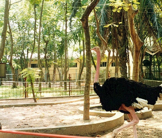 Đà điểu ở công viên Thủ Lệ