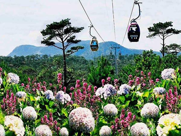 Ngắm nhìn các loài hoa từ trên cáp treo Robin
